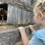 small child looks at a bull in a barn