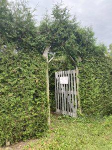 Fall Hedge Maze