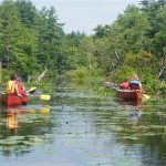 two families canoeing on a river