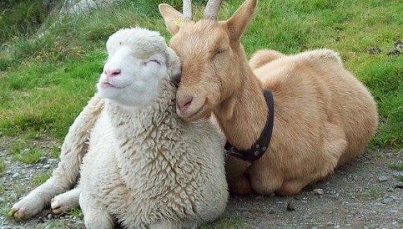 Meet Rescued Farm Animals Tour At The Maple Farm Sanctuary Each Sat Sun Worcester Central Kids Calendar